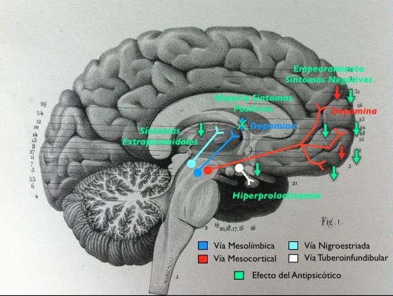 Efecto de los Antipsicóticos