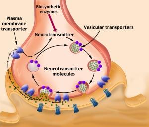 Esquema Sinapsis